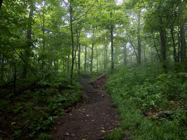 0:15:55 (70%): vermont hiking gilemountain