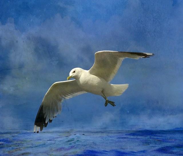Gull in the North Sea