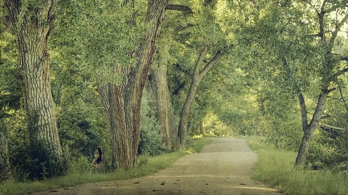 morning trees light canon landscape path textured 16x9 highlandsranch cottonwoodtrees highlinecanaltrail t1i