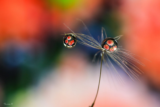 Dandelion drop art 2