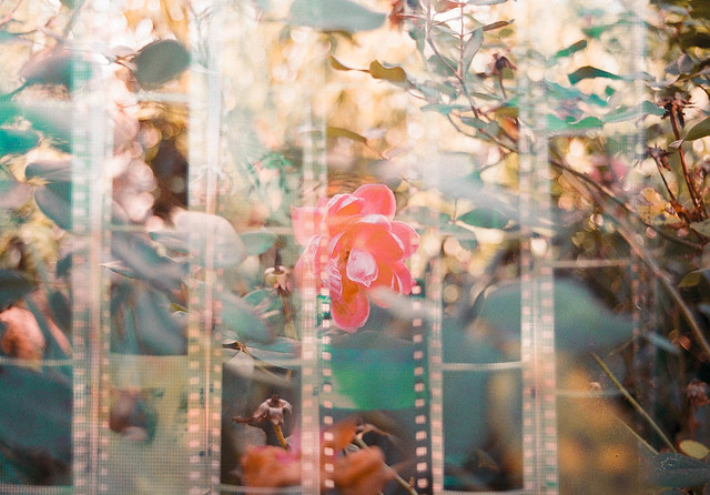 Visions on Film