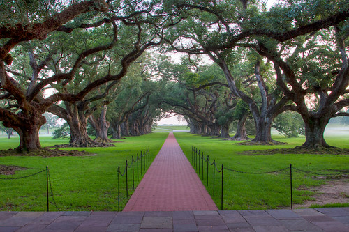 plantation oakalley