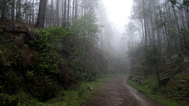 Camino después de llover
