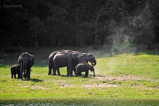 Elephants @ Thekkady   by _ChandraS_