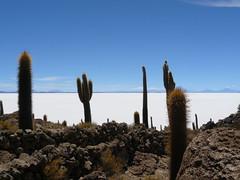 di, 19/01/2010 - 19:56 - 48. Trichoreus cactussen op Isla Inca Huasi