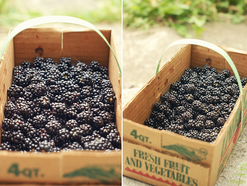10 Things to do with Blackberries | by Wayfaring Wanderer