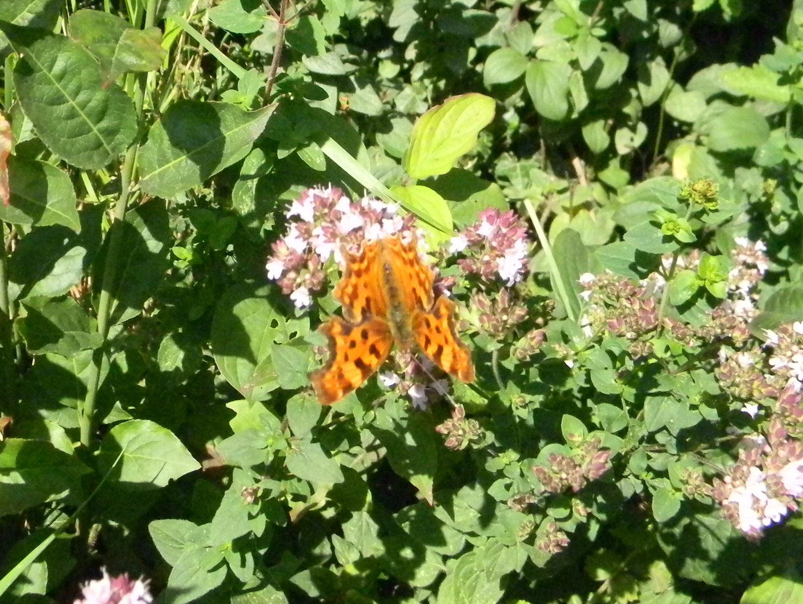 Comma Merstham to Tattenham Corner