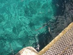 vr, 01/10/2010 - 00:55 - 38_ Een zeeslang bij Niue