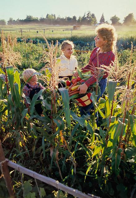 Family Garden Harvest, 2 of 4