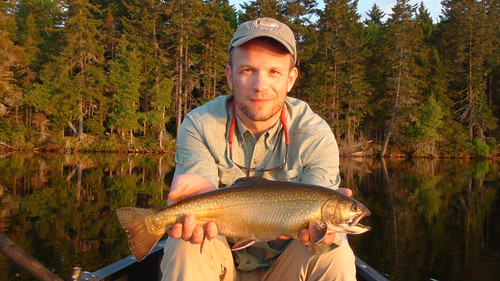 Native Maine Brook Trout   by Maine River Guides