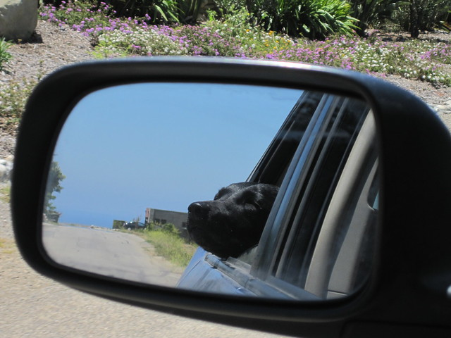 maisie in the rear view mirror