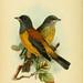 The Birds of Tierra del Fuego