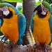 Singapore Bird Park, Singapore