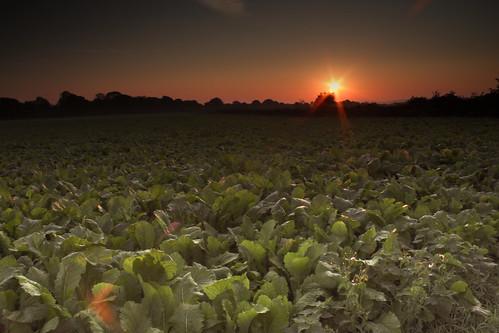 sun simon field metal sunrise filter 600 dorset 500 dairy rise lanscape bv shaftesbury 550 detectives canond maidment bvdairy kindestsi sphm17aolcom