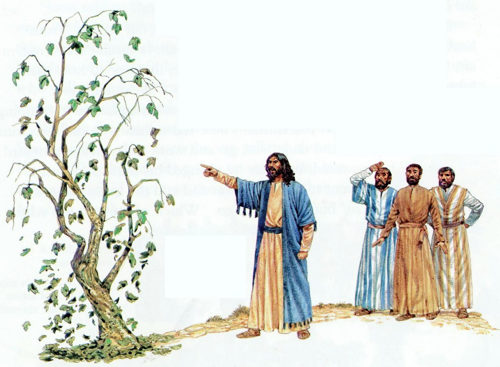 2082 Matthew 21 - Tha Parable of the Fig Tree | DK New Testament ...