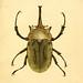 Abbildungen zu Karl Illiger's Uebersetzung von Olivier's Entomologie plates