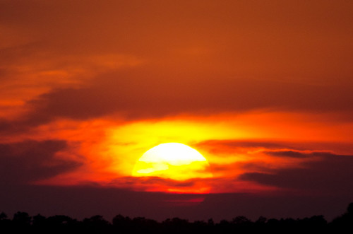 trees sunset dusk