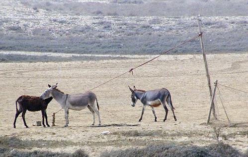 blue pakistan animal grey nikon donkeys gray editorial frenchbeach filmphotography 35mmfilmformat ©batoolnasir