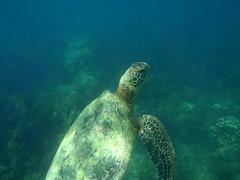 do, 20/05/2010 - 00:47 - 98. Onderwaterwereld van Baia d'Anaho