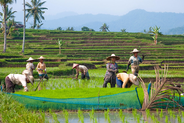 Planting rice (and having fun together)