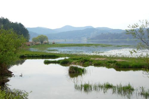 EAAF096 Upo Wetland, South Korea