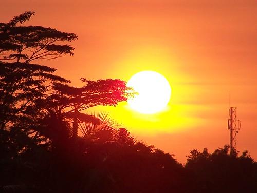 sunset orange sun nature beautiful afternoon kodak fronds z650