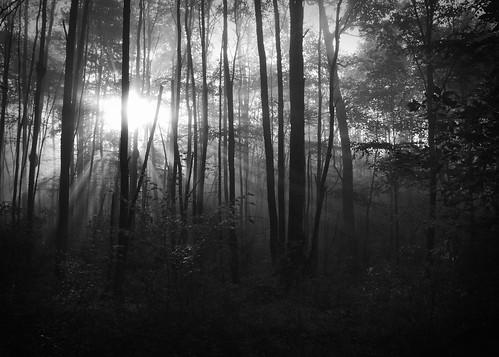 fog sunrise overlook tidioute tidioutepa allghenyforest