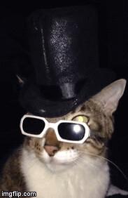 Cat in the hat & glasses