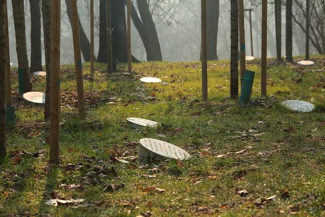 Garden of the Just, Monte Stella, Milano, Italia
