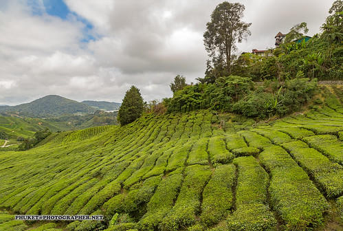 Beautiful landscapes of Cameron Highlands - tea and flower capital of Malaysia                  AD4A4361s | by Phuketian.S