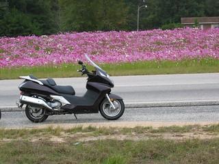 Flower&scooterOct04 | by willa.jabir