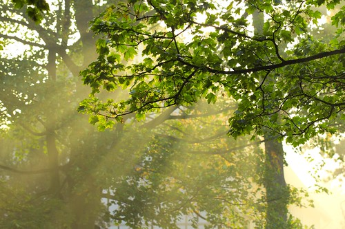 Rays of light through tree branches | by Pete Slater