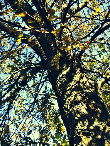 blue autumn sky tree yellow shadows