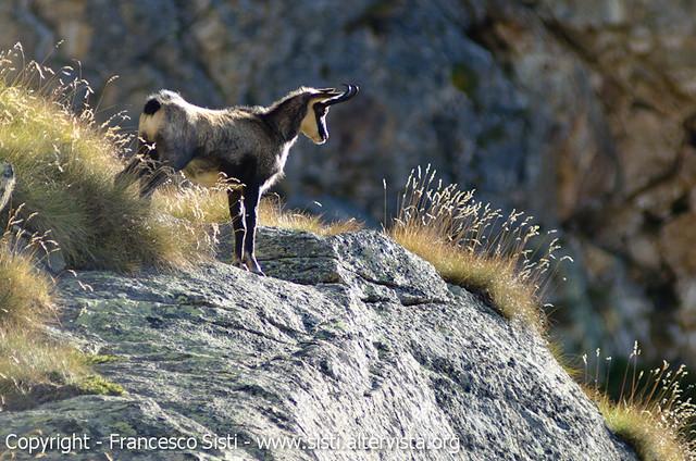 Fiero del suo regno! (Valle dell'Orco, Piemonte, Parco Nazionale del Gran Paradiso)
