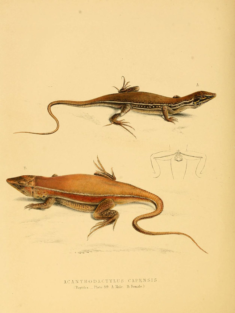 n231_w1150 | Illustrations of the zoology of South Africa  v
