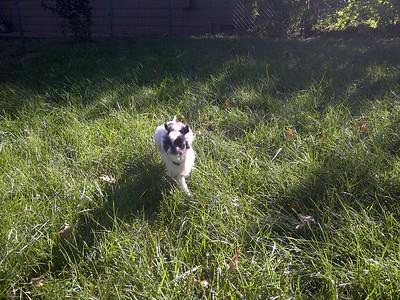 Fast Running Oliver