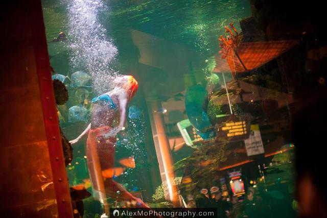 Las Vegas Elites Go Trick \u0026#39;r Yelping @ Silverton Casino | Flickr