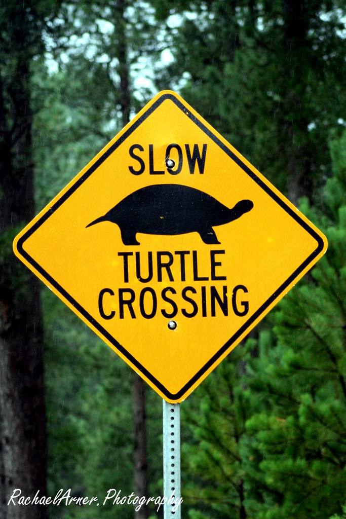 Slow Turtle Crossing >> Slow Turtles Behold The Turtle He Makes Progress Only Wh Flickr