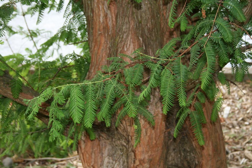 metasequoia 4 64 serial