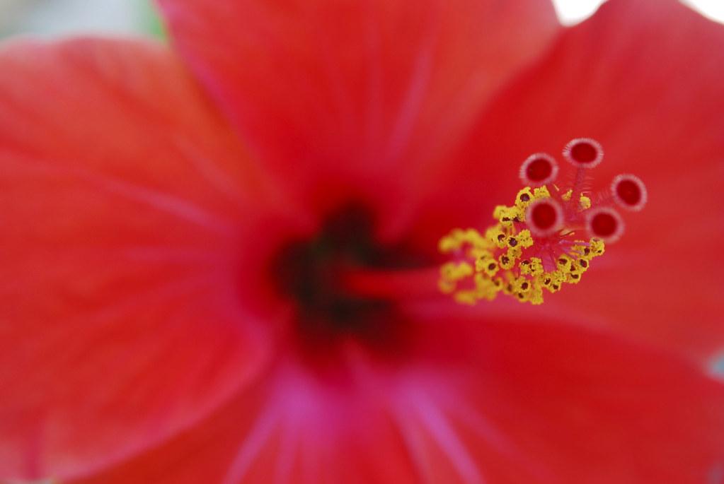 Matrimonio Tema Hawaii : Il matrimonio del cielo e dell inferno william blakeu flickr
