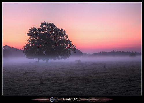 pink trees orange mist grass yellow fog sunrise canon belgium belgique belgië fields erlend 60d erroba robaye