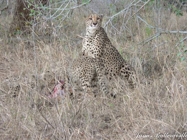 Cheetah Mkuze Falls