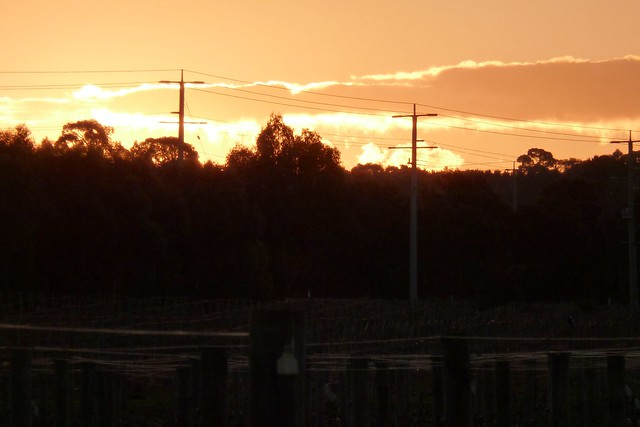 Sunset Near Olive Plantation