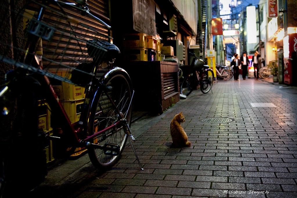 Untitled (6252009957) by Masakazu Ikeguchi