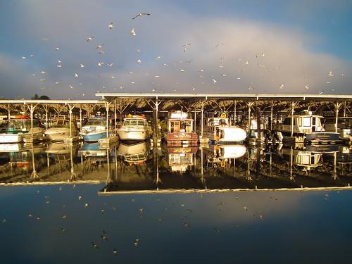 morning seagulls marina reflections boats calm wa gigharbor 1bluecanoe