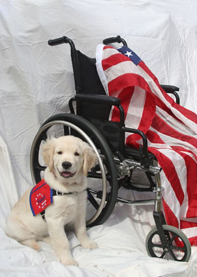 Patriot service dogs | by keywest aquarium