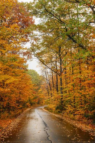 road autumn autumnfoliage trees fall leaves landscape maine newengland autumnleaves canopy ruralroad fallseason autumnroad fallcanopy
