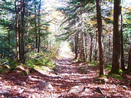 old mountain lyon trail andyarthur