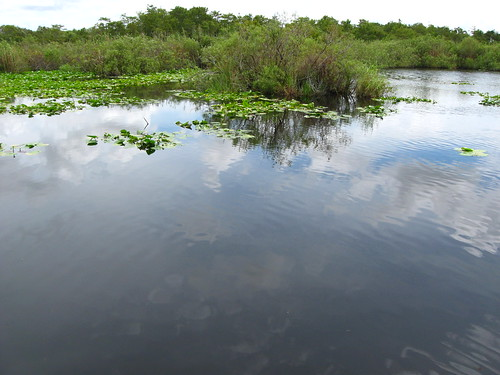 Everglades Anhinga Trail | by Guillaume Capron