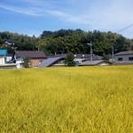 水田-6(小 黄金色)